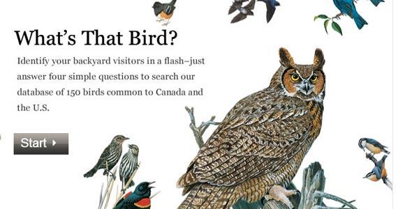 go to http://animals.nationalgeographic.com/animals/birding/backyard-bird-identifier/