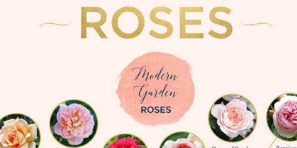 go to https://www.ftd.com/blog/share/types-of-roses