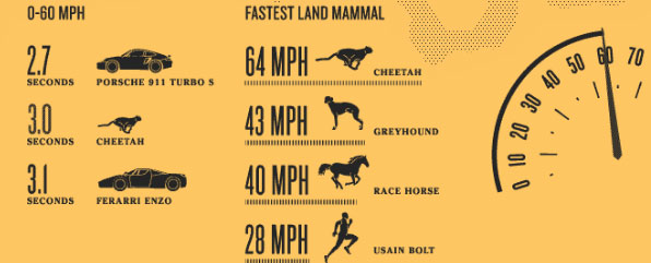 go to http://animagraffs.com/cheetah-natures-speed-machine/