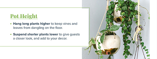 go to https://www.proflowers.com/blog/indoor-hanging-plants