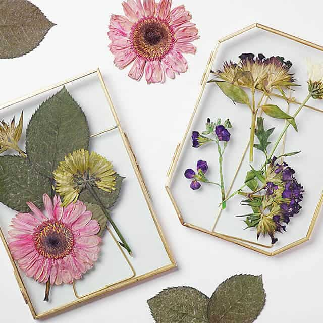 pressed flowers in glass frames